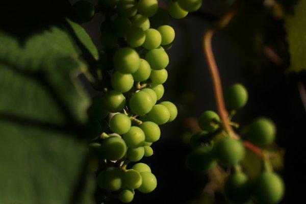 La CE prevé mayor estabilidad en el mercado del vino al final de la actual campaña 2020/21