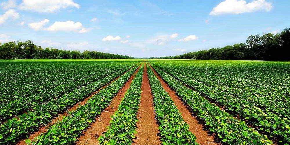 La exportación de frutas y verduras mantuvo su positiva evolución en el segundo mes de pandemia - 0