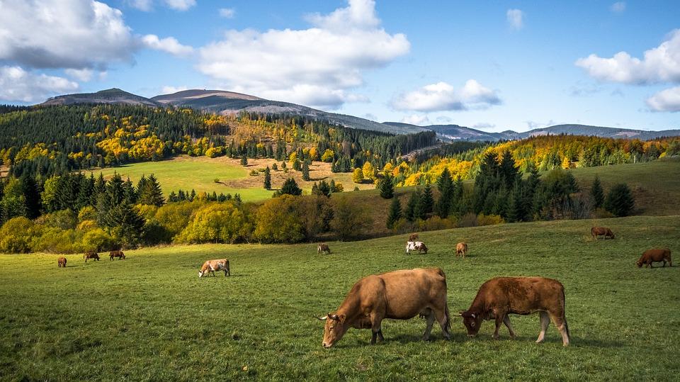 La ganadería extensiva, un modelo sostenible a generalizar para combatir el cambio climático y generar empleo