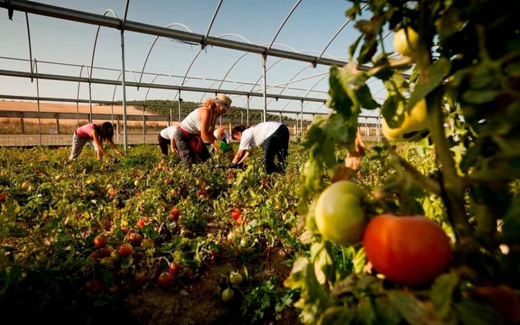 La PAC Verde: La Comisión Europea promoverá las compras públicas de alimentos ecológicos para incentivar su cultivo