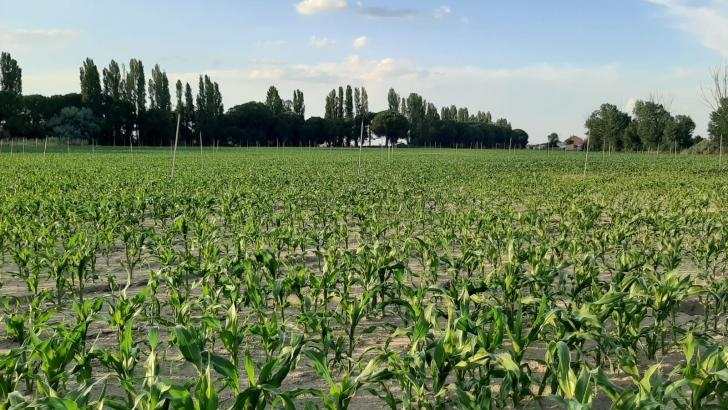 """Las cinco propuestas concretas que el Ministerio de Agricultura ha """"lanzado"""" sobre la reforma de la PAC - 0"""