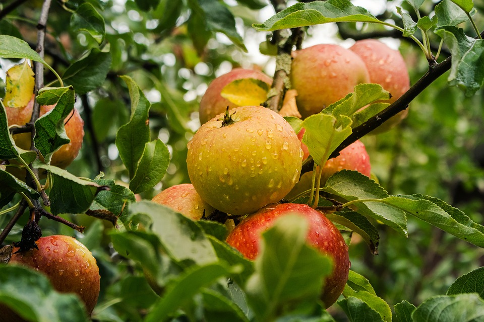 Las nuevas ayudas de la PAC al sector hortofrutícola contarán con una partida que rondará los cien millones de euros para 2023