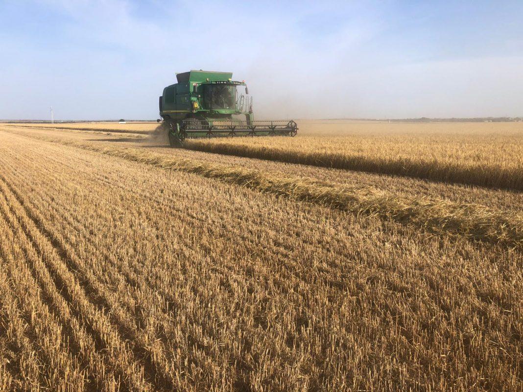 Los datos reales de rendimientos confirman que España tendrá la mejor cosecha de cereales de su historia - 0