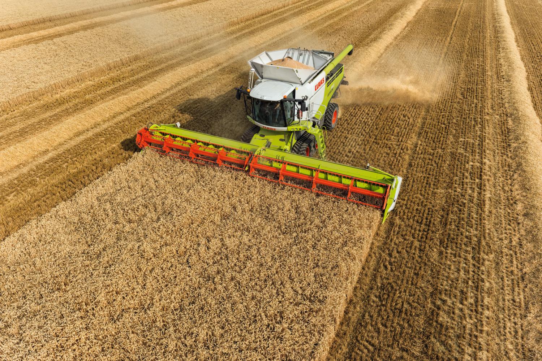 Los precios de los cereales se estancan con una subida leve del trigo duro y repeticiones en el resto - 0