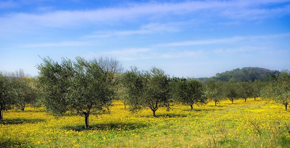 Luis Planas asegura que la nueva norma de calidad del aceite de oliva beneficiará a productores y a consumidores - 0