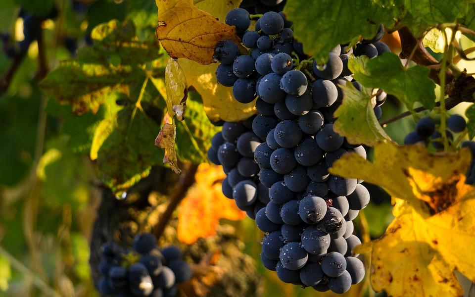 Luis Planas destaca que 13 países se han sumado a la declaración de España de solicitar fondos adicionales para el sector del vino.