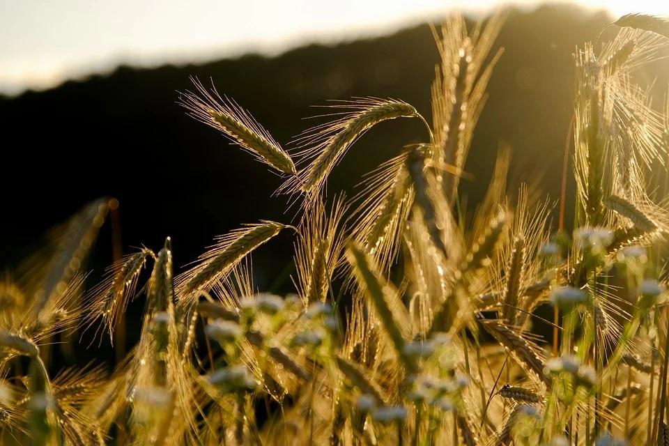 Luis Planas: La nueva PAC contará con medidas para reducir desigualdades entre hombres y mujeres en la actividad agraria - 0