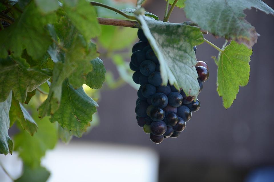 MAPA y sector analizan medidas para reequilibrar el mercado vitivinícola a medio y largo plazo.