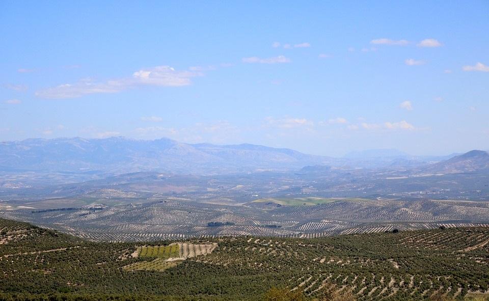 Mensaje claro a Europa y la PAC: «El olivar es una joya ecológica que debemos mimar al máximo. No podemos permitirnos perderlos» - 0