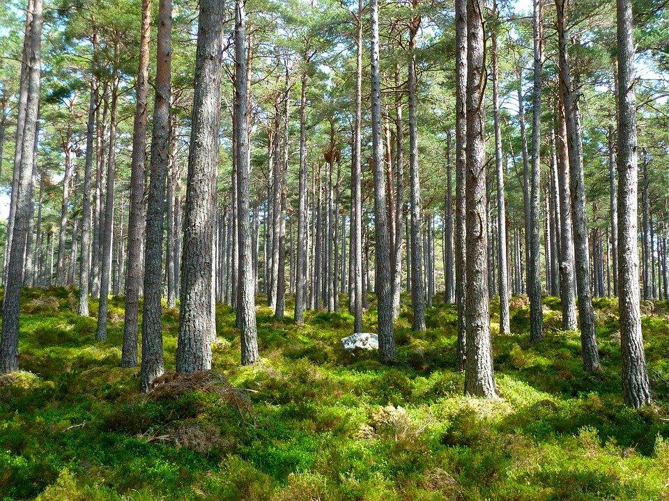 Pacto Verde Europeo: La CE propone una nueva estrategia para proteger y restaurar los bosques de la UE Los bosques aliados en la lucha contra el cambio climático