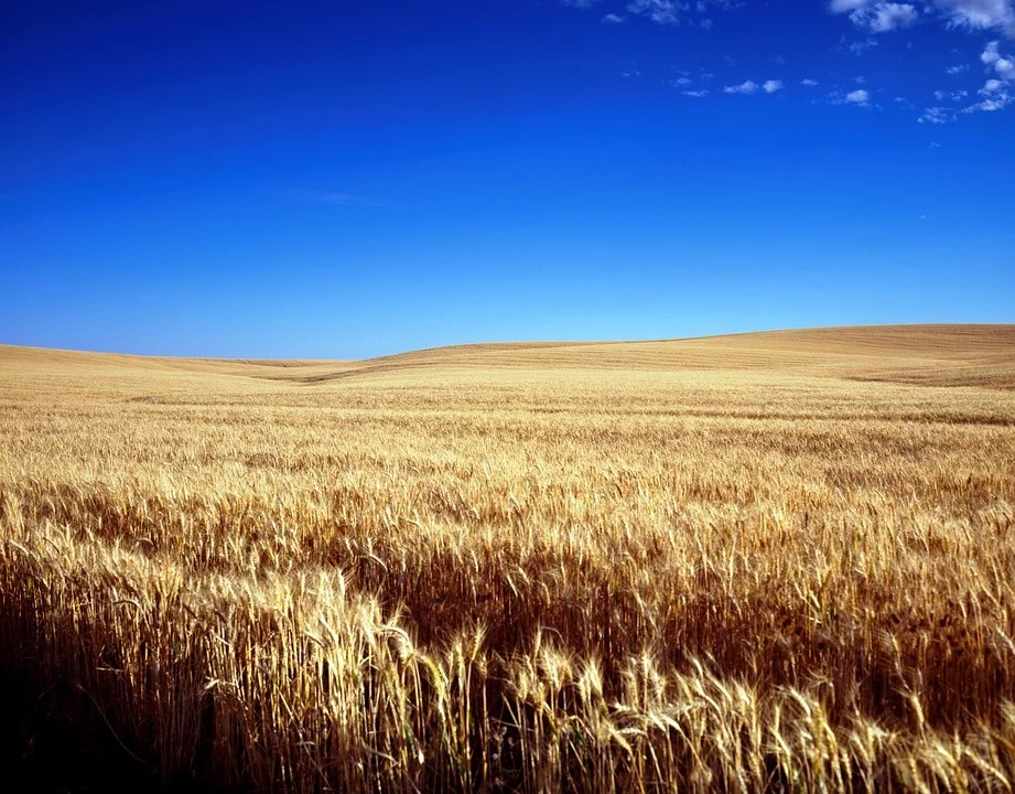 Pese a la incertidumbre, sigue el buen momento y vuelven a subir los precios mayoristas de los cereales a excepción del trigo duro