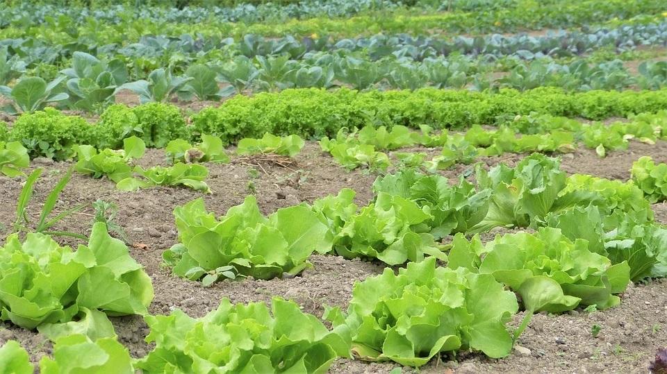 Planas defiende la inclusión del agricultor a tiempo parcial como receptor de ayudas de la PAC al considerarlo 'agricultor profesional'
