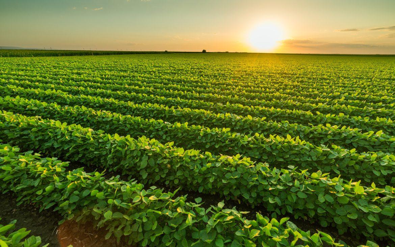 """Planas dice que la transposición de directiva europea hará que cadena alimentaria sea """"más equilibrada"""" - 0"""