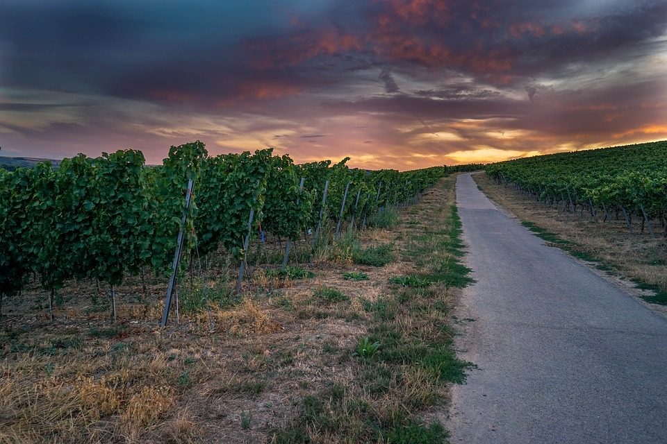 Todo el sector vitivinícola de CLM podrá solicitar la ayuda directa de 206 millones por las pérdidas sufridas por el Covid