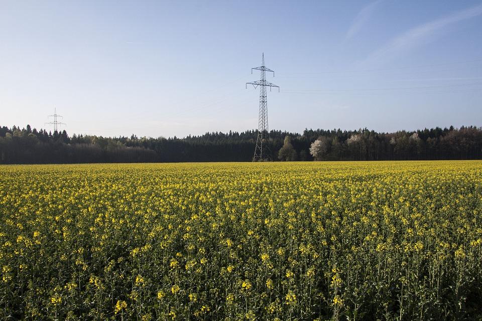Un 7% de grandes empresas agrarias obtienen ya el 42% del valor de la producción que se genera en el campo español - 0