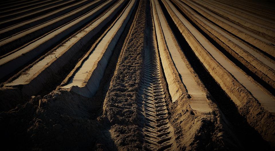 Un total de 176 jóvenes agricultores murcianos se benefician de 5 millones en ayudas para creación de empresas agrarias. - 0