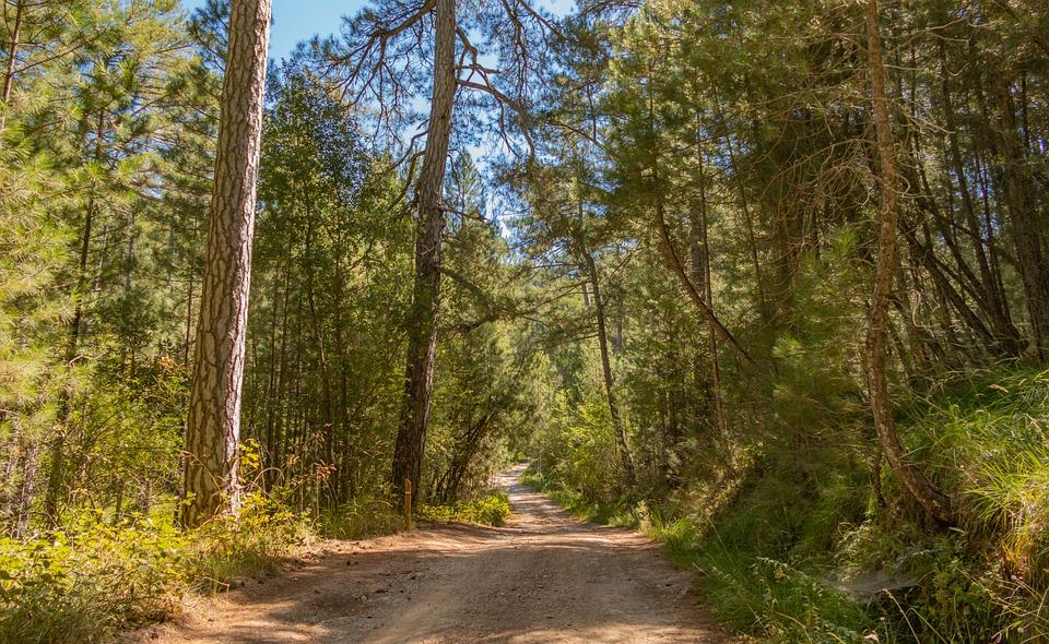 Una mejor gestión para garantizar la supervivencia del sector forestal español. - 0